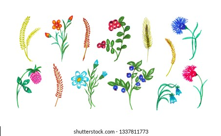 Wildflowers Hand Drawn Collection. Illustration for Your Design.