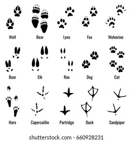 Wildlife animals, reptiles and birds footprint, animal paw prints set. Footprints of variety of animals, illustration of black silhouette footprints