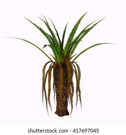 Williamsonia Plant 3D Illustration - Williamsonia dominated the flora of Jurassic and Cretaceous Periods.
