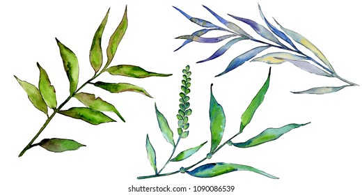 Willow branches in a watercolor style isolated. Aquarelle leaf for background, texture, wrapper pattern, frame or border.