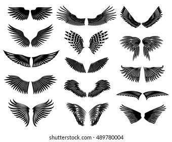 Wings of real birds in nature.  collection symmetric wings.