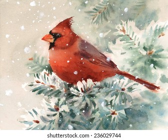 Winter Cardinal Bird Hand Painted Watercolor Illustration