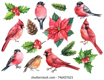 winter watercolor set of elements, bullfinch, red cardinal, robin, holly berries, flower poinsettia, pine cone, spruce branches.