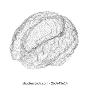Wire-frame of human with occipital region of brain. Isolated on white background
