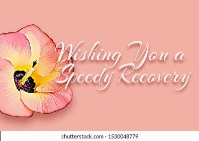 Wish you a speedy recovery with portia flower (Thespesia populnea)