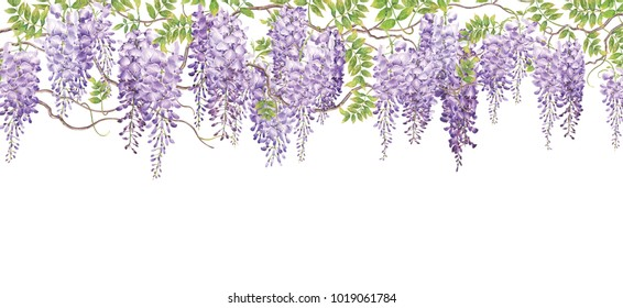 Wisteria background with watercolor painting.Hand drawn on white background.Illustration for various tasks such as greeting cards,love card. birthday cards, or different print jobs.
