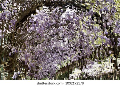 wisteria in bloom,  tribute to Pollock, abstract expressionism, art, digital, abstract illustration with mosaic effects of gradient colors white, mauve,