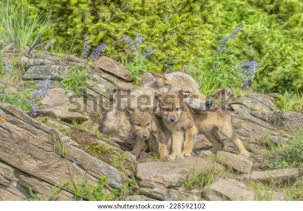 Wolf with cubs at den site, Montana