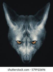 Wolf face portrait