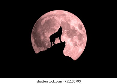 Wolf howling at the full moon. Slightly red colored