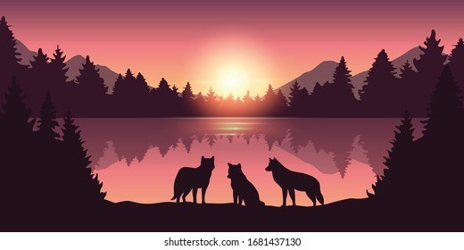 wolf pack at beautiful purple forest and lake nature landscape at sunrise illustration