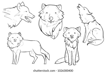 Wolf sketches on white background
