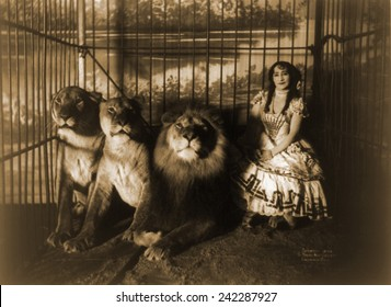 Woman circus performer named Adjie seated in a cage with three lions. 1899.