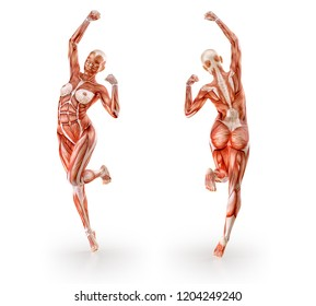 Woman muscles anatomy figure  dancing, workout, isolated on white.  Healthcare, fitness, diet and sport concept. Clipping path included. 3D illustration