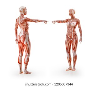 Human Muscle Anatomy Images, Stock Photos & Vectors