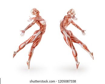 Woman muscles anatomy figure workout, dancing, isolated on white.  Healthcare, fitness, diet and sport concept. Clipping path included. 3D illustration