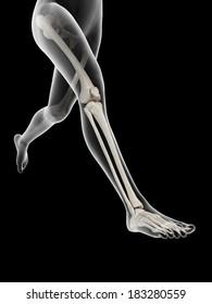 woman running - visible anatomy of the leg bones