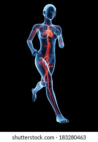 woman running - visible anatomy of the vascular system