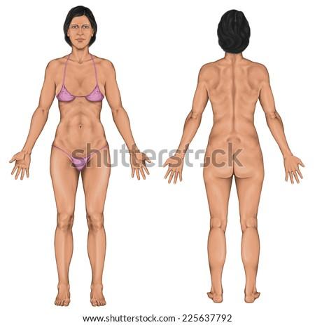 Woman Women Female Anatomical Body Surface Stock Illustration