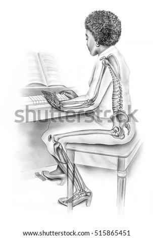 Womens Anatomy Everyday Life Skeletal Structure Stock Illustration ...