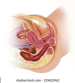 Women's reproductive