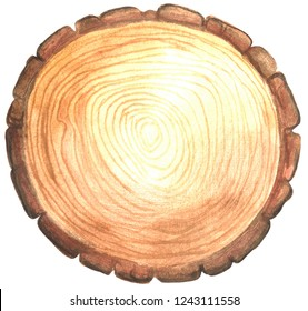 Wooden stump. Watercolor painting isolated on white background.