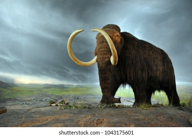 Woolly big mammoth