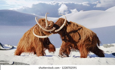 woolly mammoth bulls fighting, prehistoric ice age mammals in snow frozen landscape (3d rendering)