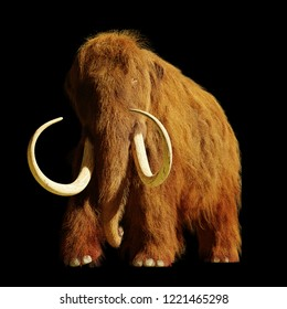 woolly mammoth, extinct prehistoric elephant species isolated on black background (3d illustration)