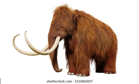 woolly mammoth, prehistoric mammal isolated on white background (3d illustration)