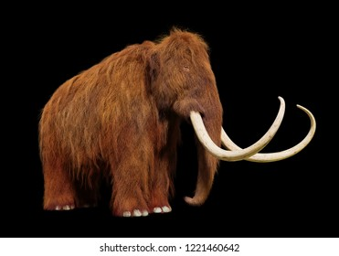woolly mammoth, prehistoric mammal isolated on black background (3d illustration)