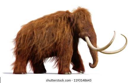 woolly mammoth, running prehistoric mammal isolated with shadow on white background (3d illustration)