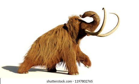 woolly mammoth, walking prehistoric mammal isolated with shadow on white background (3d illustration)