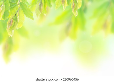 World environment day concept: Abstract blurred beautiful nature background