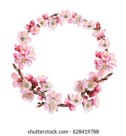 Wreath from blossoming apple-tree isolated on white background. Flowering cherry branches, apricots. Wedding frame. Sakura. Illustration. Watercolor. Handmade. Picture