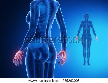 WRIST Bone Anatomy Xray Scan Stock Illustration 265263005 - Shutterstock