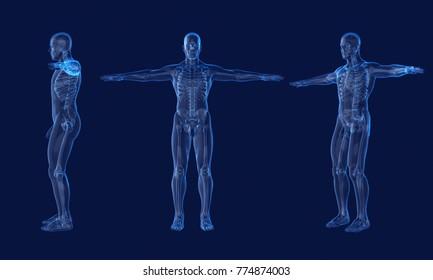 x ray Human anatomy.3d rendering