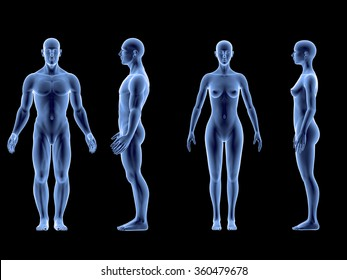 X ray human male female body. Anatomy concept. Isolate, 3d render.