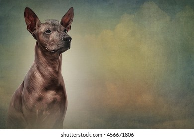Xoloitzcuintle - hairless mexican dog breed portrait oil painting on old vintage color grunge paper background