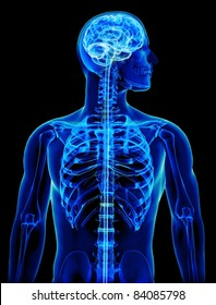 X-ray with brain and spinal cord concept,Part of a medical series