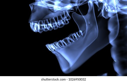 X-Ray effect image of human skull and jaw viewed from the side. 3D Rendering