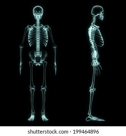 X-ray full body of skeleton in brightness blue with black background