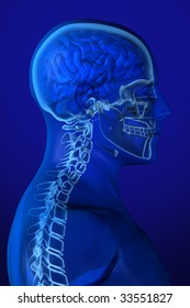 X-ray head anatomy over a blue background