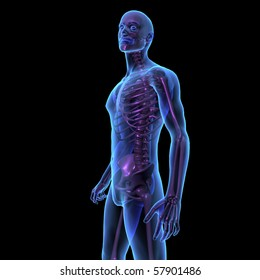 X-ray illustration of male human body and skeleton standing. 3D render, side view.