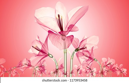 x-ray image of a flower  isolated on pink, the Ameryllis 3d illustration