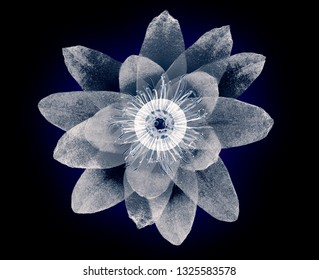 x-ray image of a flower  isolated on black, the lotus 3d illustration