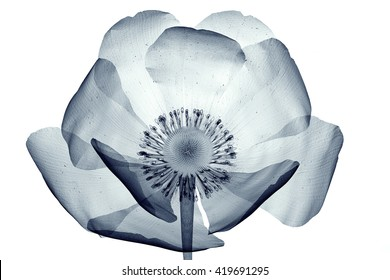 Flowers X,ray Images, Stock Photos \u0026 Vectors