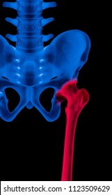 X-ray of lower half length human skeleton anterior view red highlight in the femur or thigh bone pain area- 3D medical and Biomedical illustration- Human anatomy concept- Blue tone color