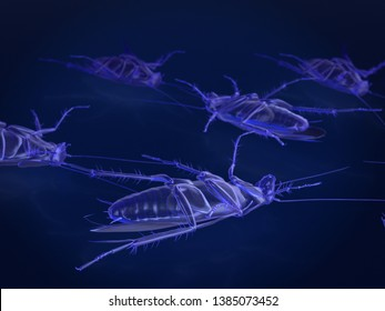 x-ray mode of dead cockroaches. 3Drendering