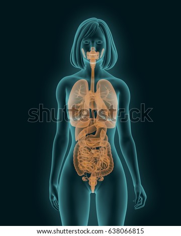 Xray Picture Woman Visible Internal Organs Stock Illustration